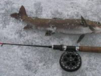 Зимняя рыбалка на ленка