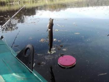 рыбалка на кружки