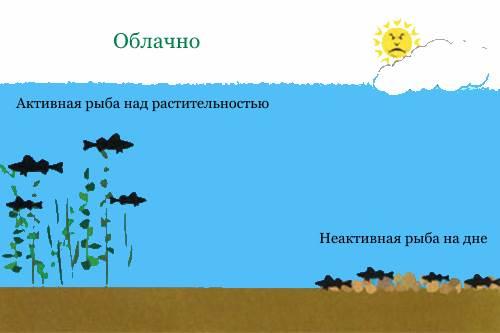 рыба в разную погоду