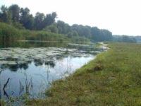 щука в не большой реке