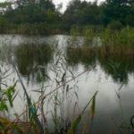 Ловля карася летом на реке Чемровка