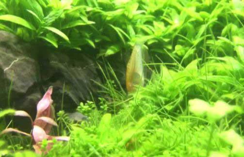 зарос весь аквариум