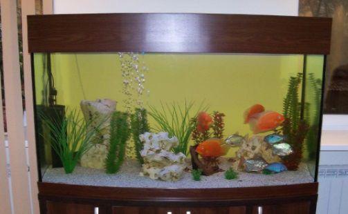 столитровый аквариум