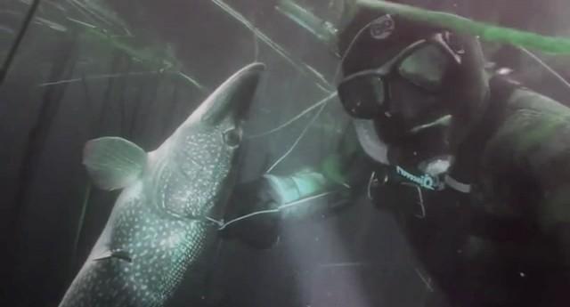Speerfischen auf Hecht